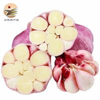 京东PLUS会员、PLUS会员 :  苹果红了  新鲜紫皮大蒜 中果500g装